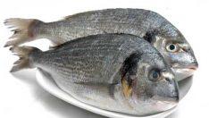 Taze Balığı Anlamanın Püf Noktaları
