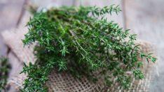 Adet Söktürücü Şifalı Bitkiler Nelerdir?