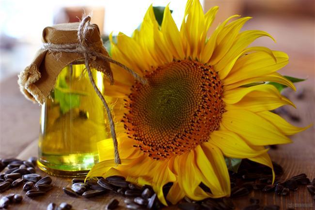Ayçiçeği yağı Genelde yemeklerde görmeye alıştığımız ayçiçek yağının kozmetik ve cilt bakım ürün formüllerinde de kullanıldığını biliyor muydunuz? A, B, D ve E vitaminleri ve minerallerce zengin olan ayçiçek yağı yumuşatıcı, sakinleştirici, nemlendirici özellikleri nedeniyle kullanılıyor. Orta emilime sahip ve tek başına uygulandığı zaman hafif yağlı bir his bırakan ayçiçek yağı olgun, yaşlanmaya eğimli, kuru ve hassas ciltler için yapılan cilt bakım ürünlerinin yapısına eklenebiliyor. Bu ürünlerin içerik listesinde Helianthus Annuus (Sunflower) Seed Oil olarak görebilirsiniz.