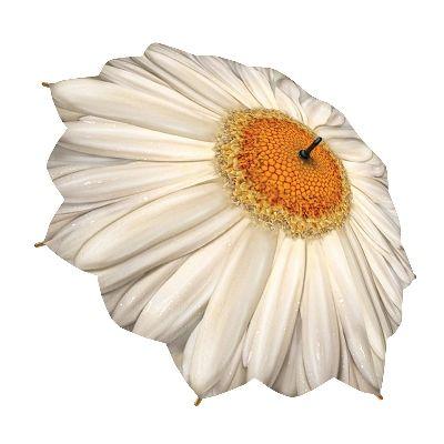 Şemsiye Modelleri Beyaz Papatya Çiçeği