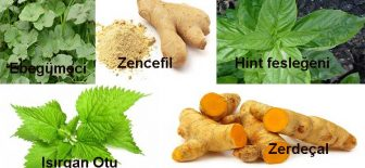 Bağışıklık Sistemini Güçlendiren Stresi Azaltan Bitkiler