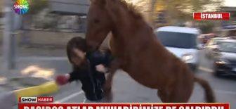 Show Tv Kadın Muhabiri Çılgın Atların Saldırısına Ugradı