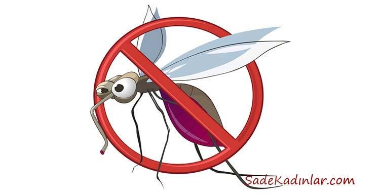 İşte Doğal Sivrisinek Kovucu, Sivrisinek Neye Gelmez